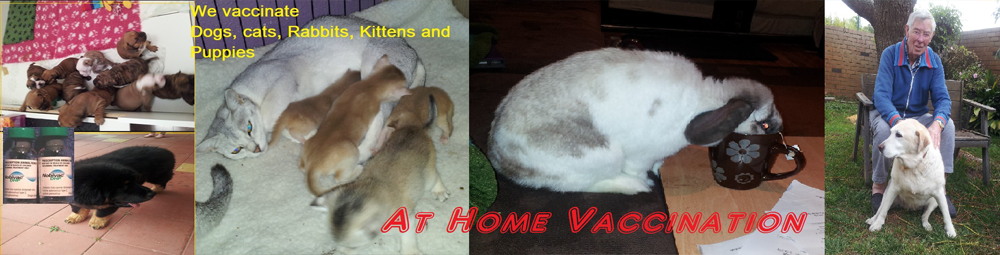 We vaccinate your dogs, cats, kittens, puppies and Rabbits at home